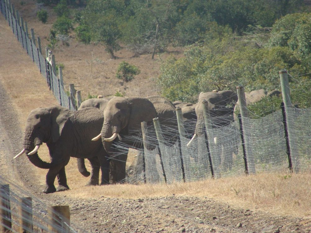 Elephants Fence Breaking.jpg